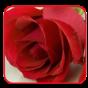 唯美玫瑰花动态桌面 工具 LOGO-玩APPs