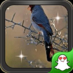 凝望的小鸟-绿豆秀秀动态壁纸 工具 App LOGO-硬是要APP