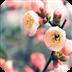 娇滴滴的花儿-3D主题壁纸 休閒 App LOGO-APP開箱王