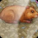 饲养小仓鼠 休閒 App LOGO-APP試玩