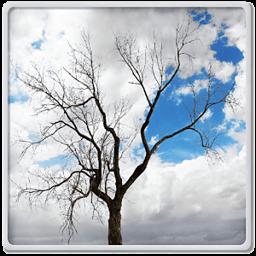 孤独的树动态壁纸 工具 App LOGO-APP開箱王