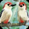 彩鸟的传说 休閒 App LOGO-APP試玩