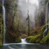 自然山水动态壁纸 工具 App LOGO-硬是要APP