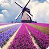 浪漫梦幻风景动态壁纸 工具 App LOGO-硬是要APP