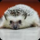 可爱小刺猬选关版 休閒 App LOGO-APP試玩