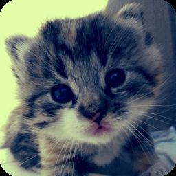 可爱的猫猫壁纸 工具 App LOGO-硬是要APP
