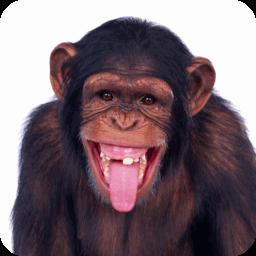 搞笑视频集最新 媒體與影片 App LOGO-硬是要APP