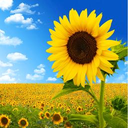 最后的夏天锁屏 工具 App LOGO-APP試玩