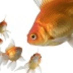 黄金鱼动态壁纸 攝影 App LOGO-硬是要APP