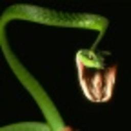 蛇高清壁纸 攝影 App LOGO-APP試玩