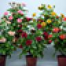 植物摆放风水 娛樂 App LOGO-硬是要APP
