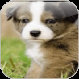 可爱宠物连连看 休閒 App LOGO-硬是要APP