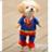 狗妹纸也要cosplay美衣搭配优雅又迷人 娛樂 App LOGO-APP開箱王
