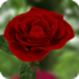 3D玫瑰动态壁纸 個人化 App LOGO-APP試玩