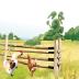 牧场物语矿石镇的朋友 策略 App LOGO-APP試玩