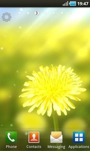 黄色花朵壁纸