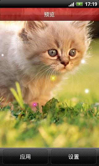 超萌小猫咪动态壁纸