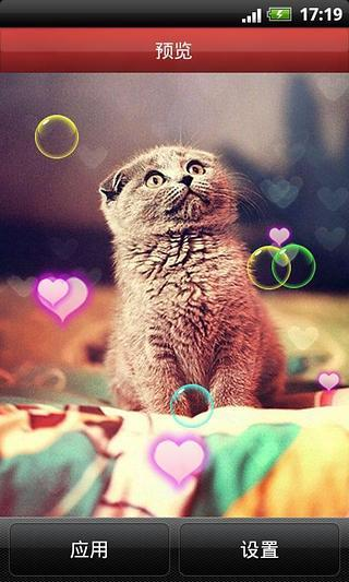 可爱小猫咪动态壁纸