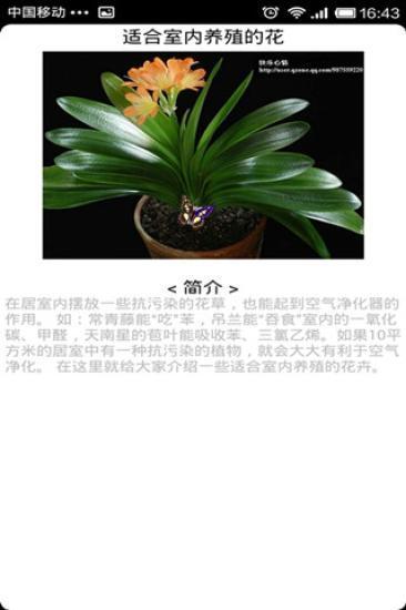 适合室内养殖的花