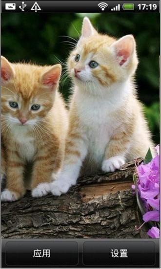可爱的小动物动态壁纸