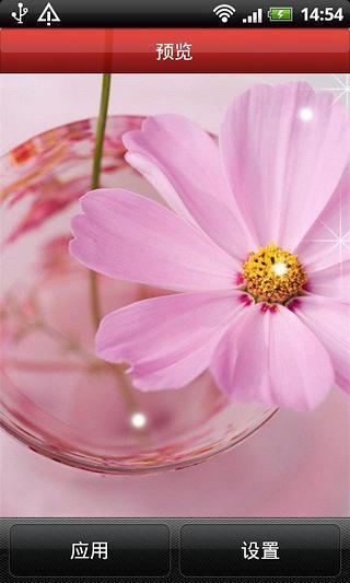 粉红色花朵动态壁纸