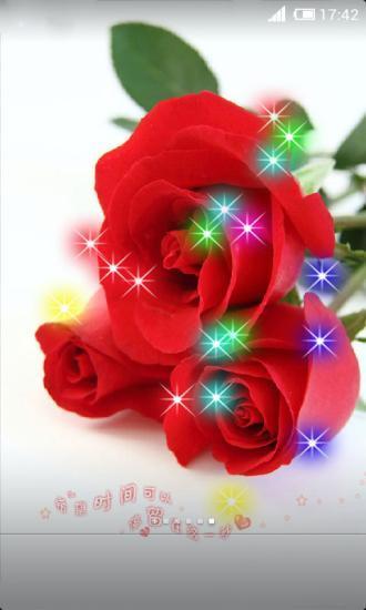 玫瑰花的绽放动态壁纸