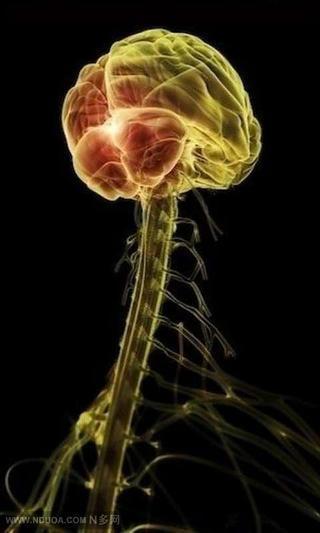 3D医学人体器官科普美图