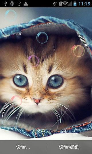 可爱小猫动态壁纸