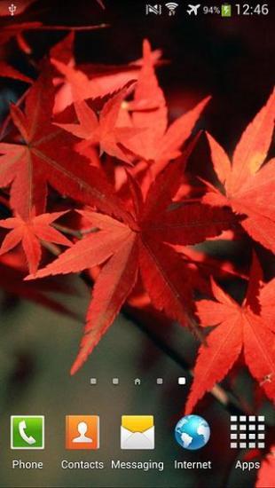 秋天生活壁纸