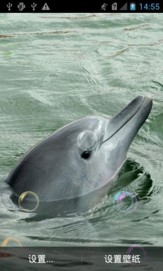 海豚动物动态壁纸