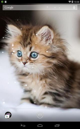 Q猫动态壁纸