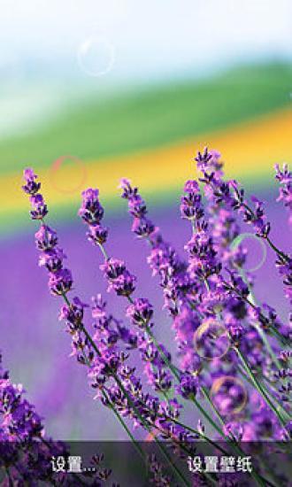 紫色花季动态壁纸