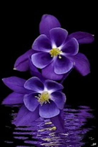 Purple Flowers Live Wallpaper
