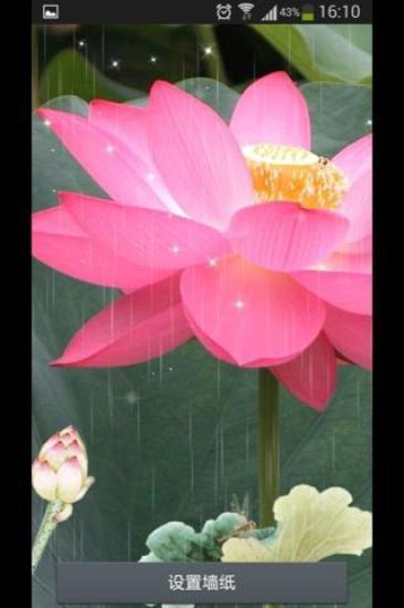 雨露荷花-绿豆秀秀动态壁纸