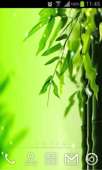 绿竹动态壁纸