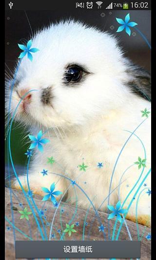 兔宝宝-绿豆秀秀动态壁纸