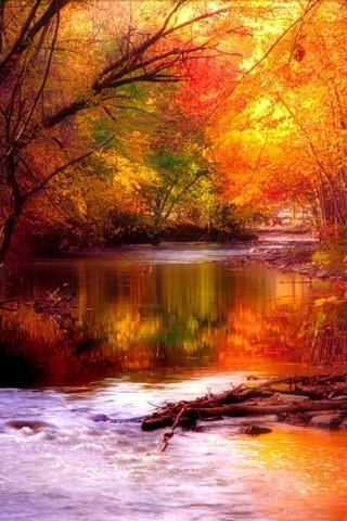 自然风景手机壁纸