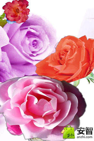 3D玫瑰花动态壁纸