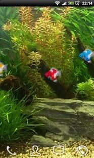 金鱼水族馆动态壁纸