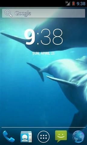 神奇的海豚高清壁纸