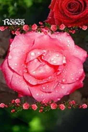 爱的红玫瑰动态壁纸