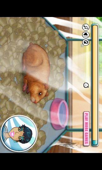 玩休閒App|饲养小仓鼠免費|APP試玩