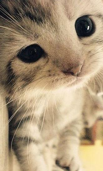 天真可爱小萌猫动态壁纸