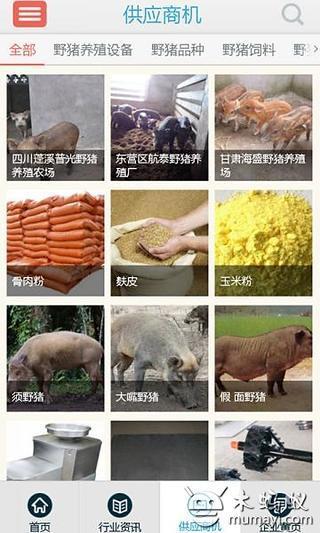 中国野猪网