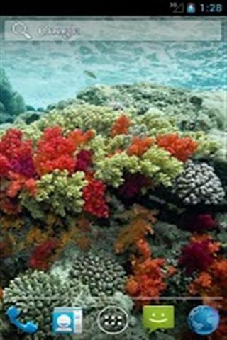 海洋生物壁纸