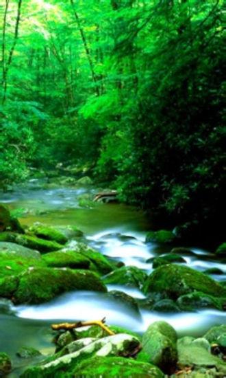 唯美自然景色动态壁纸