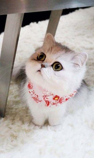 萌宠猫咪手机壁纸
