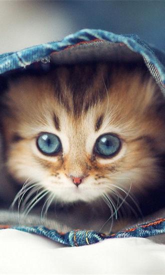 可爱猫咪壁纸合集