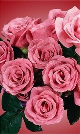 浪漫玫瑰花动态壁纸