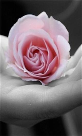 免費下載工具APP|浪漫玫瑰花动态壁纸 app開箱文|APP開箱王